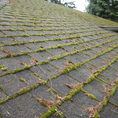 Moss Removal In Essex